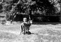 Boys and Dogs circa 1963